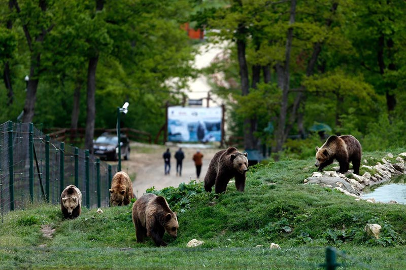 Bear Sanctuary